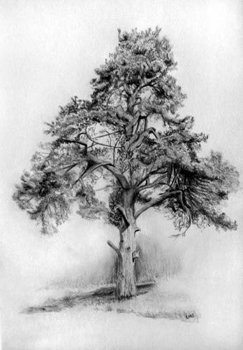 Tree on Spey Riverbank original fine art by Ulrike Miesen-Schuermann
