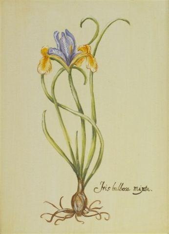 """Herbarium 1"" original fine art by Ewa Kunicka"