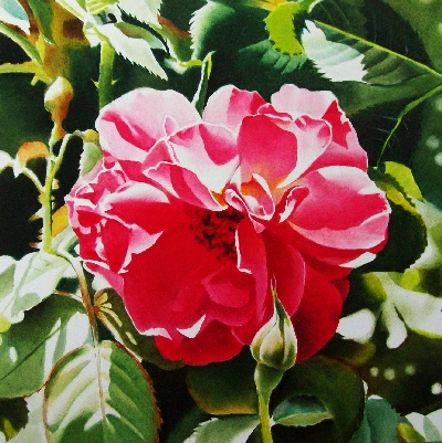 """A Star is Born....My Rose Garden"" original fine art by Jacqueline Gnott, TWSA, WHS"