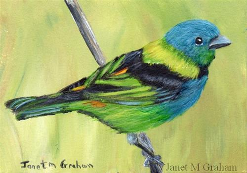 """Green Headed Tanager ACEO"" original fine art by Janet Graham"