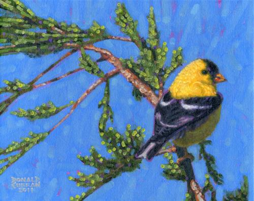 """Goldfinch"" original fine art by Donald Curran"