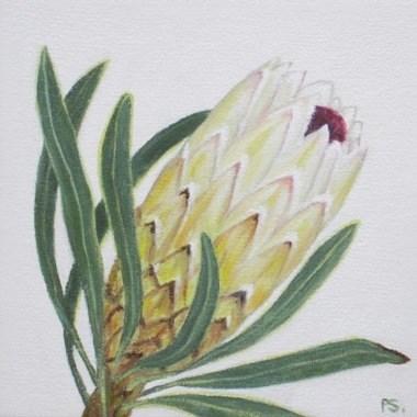 """""""Protea I"""" original fine art by Pera Schillings"""