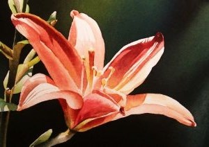 """Peach Day Lily"" original fine art by Jacqueline Gnott, whs"