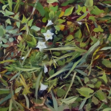 """Oil Painting of Bindweed"" original fine art by Deb Anderson"