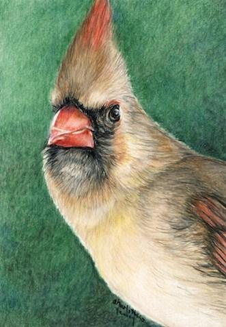 """Female Cardinal"" original fine art by Charlotte Yealey"