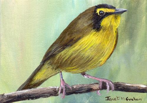 """Kentucky Warbler ACEO"" original fine art by Janet Graham"