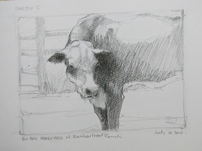 """Sketch #5___Big Boy Hereford"" original fine art by V.... Vaughan"