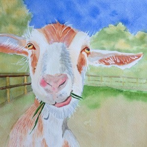 """Sept 3:  Goofy Goat"" original fine art by Dana Richards"