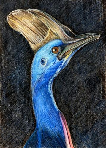 """Wildlife Painting, Bird Nature, Cassowary The Art of Nature, Fine Art by Mindy Lighthipe"" original fine art by Mindy Lighthipe"