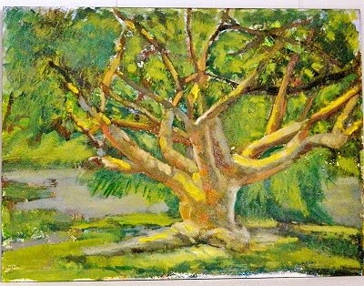 """Gumbo Limbo Tree"" original fine art by Sharon Yarbrough"