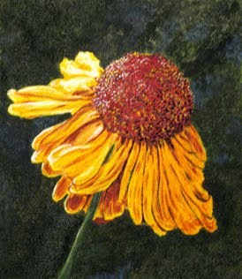 """Yellow Coneflower"" original fine art by Nan Johnson"