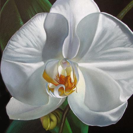"""Phalaenopsis 24x24 "" original fine art by M Collier"