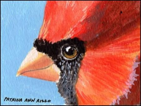"""Cardinal Face"" original fine art by Patricia Ann Rizzo"