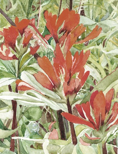 """Red Indian Paintbrush"" original fine art by Carole Baker"