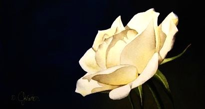 """White Rose"" original fine art by Jacqueline Gnott, TWSA, WHS"