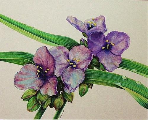 """Spiderwort"" original fine art by Maria Levandowski"