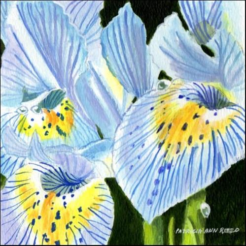 """Miniature Iris Close Up"" original fine art by Patricia Ann Rizzo"