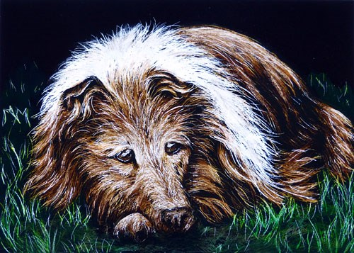 """Collie"" original fine art by Monique Morin Matson"