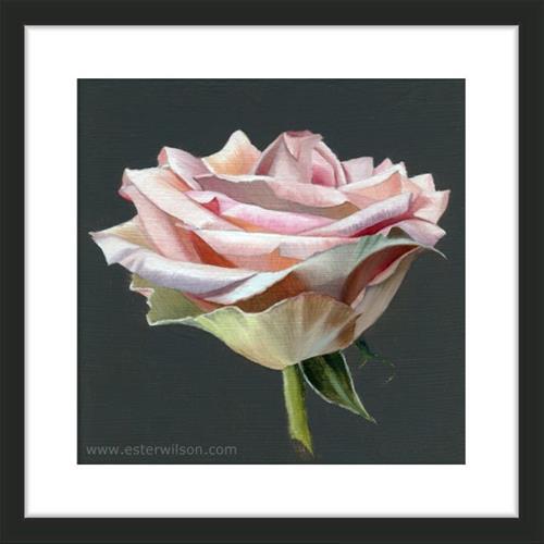 """""""Full Bloom Rose"""" original fine art by Ester Wilson"""
