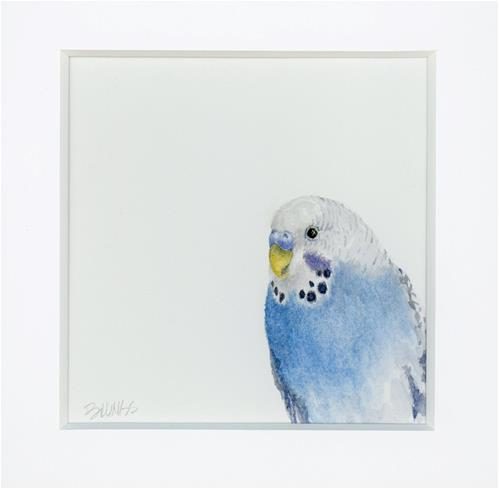 """Parakeet Study VII  aka Gus"" original fine art by Susanne Billings"