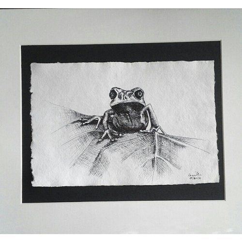 """Pen Drawing of Frog"" original fine art by Camille Morgan"