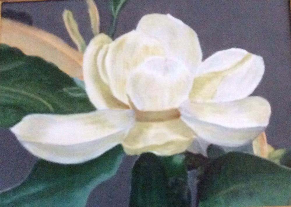 """Magnolia Blossom"" original fine art by Charlotte Lough"