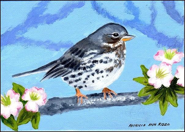 """Fox Sparrow"" original fine art by Patricia Ann Rizzo"