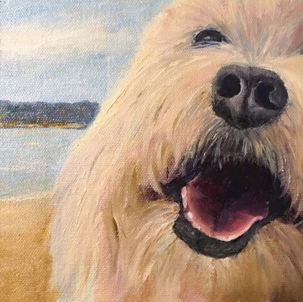 """Happy Havanese"" original fine art by Judith McKenna"