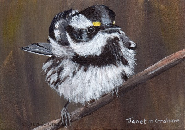 """Black Throated Gray Warbler ACEO"" original fine art by Janet Graham"