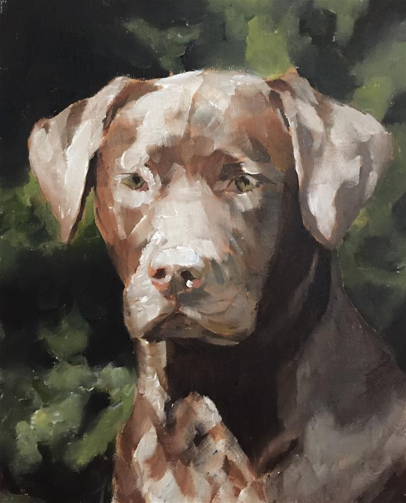 """Chocolate Labrador"" original fine art by James Coates"