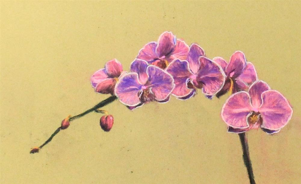 """Orchids"" original fine art by Marco Vazquez"