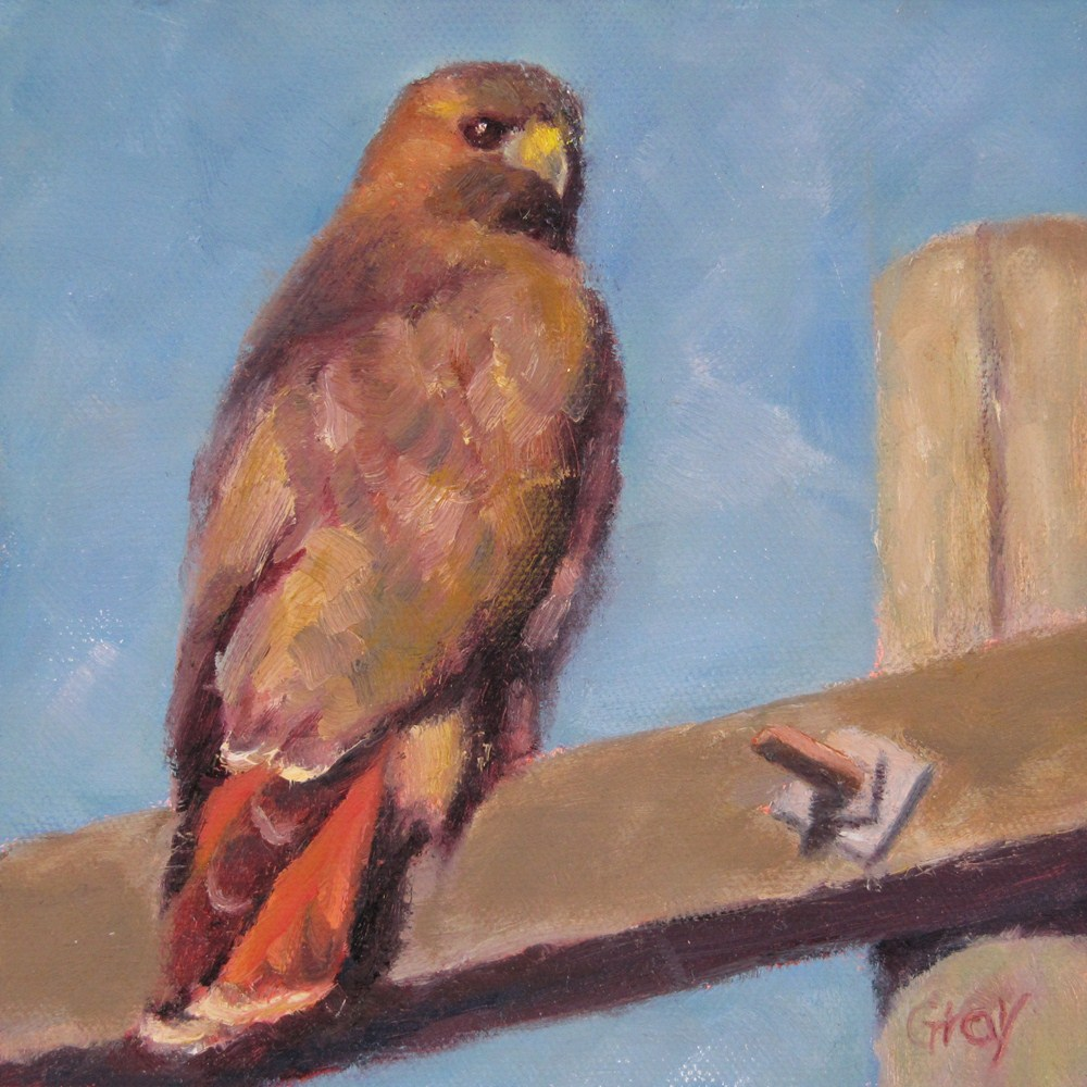 """""""Red-tailed Hawk on Telephone Pole"""" original fine art by Naomi Gray"""