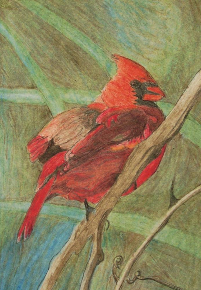 """Cardinal on a limb"" original fine art by John Marcum"