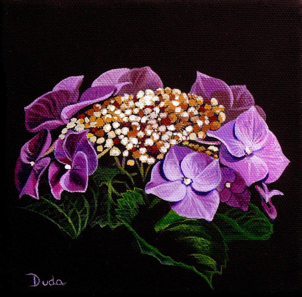"""""""Lacecap Hydrangea"""" original fine art by Susan Duda"""