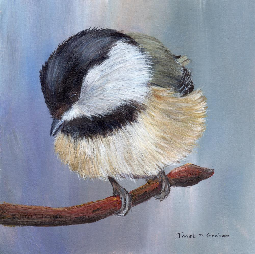"""Black Capped Chickadee No 4"" original fine art by Janet Graham"