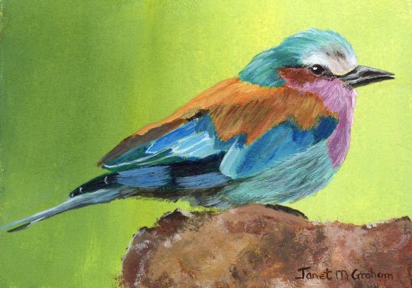 """Lilac Breasted Roller ACEO"" original fine art by Janet Graham"