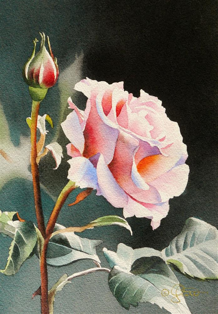"""Pink Rose"" original fine art by Jacqueline Gnott, whs"