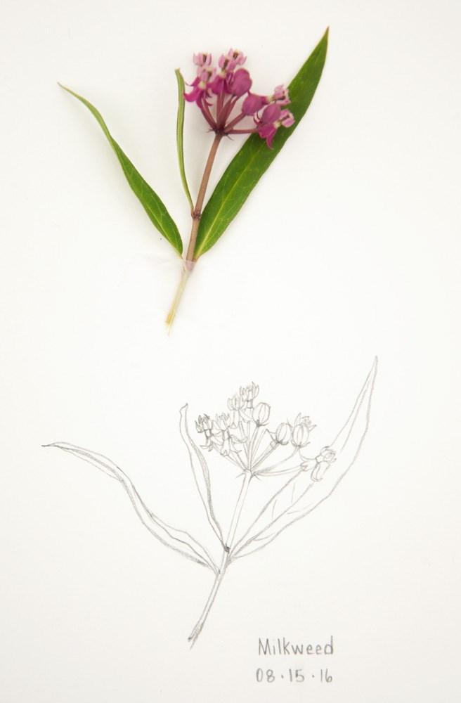 """Charlotte's Web & Milkweed"" original fine art by Debbie Lamey-Macdonald"