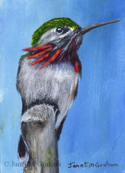 """Calliope Hummingbird ACEO"" original fine art by Janet Graham"