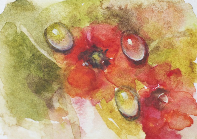 """Water Droplets on Poppies"" original fine art by Sue Churchgrant"