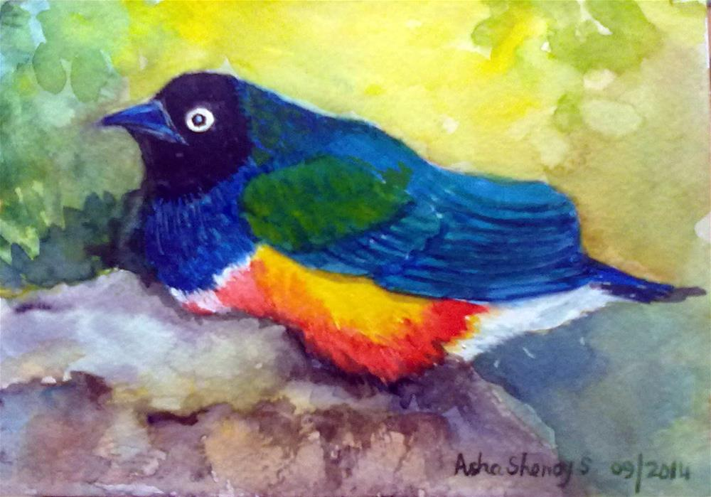 """Brilliant Starling from Ngorongoro crater, Tanzania"" original fine art by Asha Shenoy S"