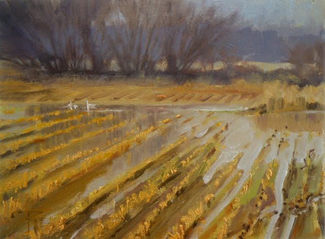 """Trumpeter fields of Whatcom county landscape oil painting"" original fine art by Robin Weiss"