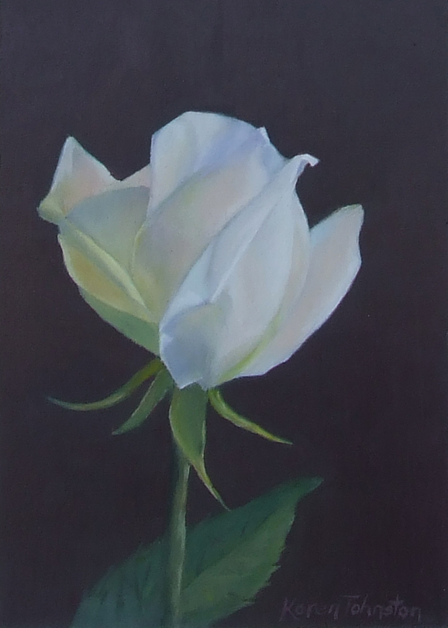 """White Rose"" original fine art by Karen Johnston"