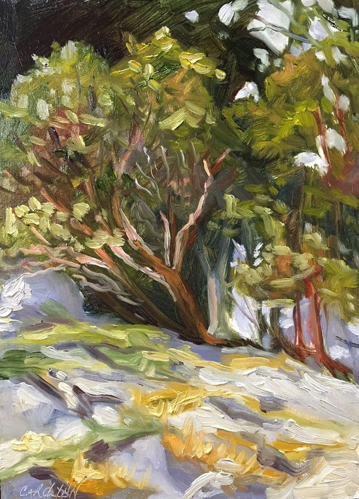 """Pender Island Arbutus"" original fine art by Carolynn Doan"