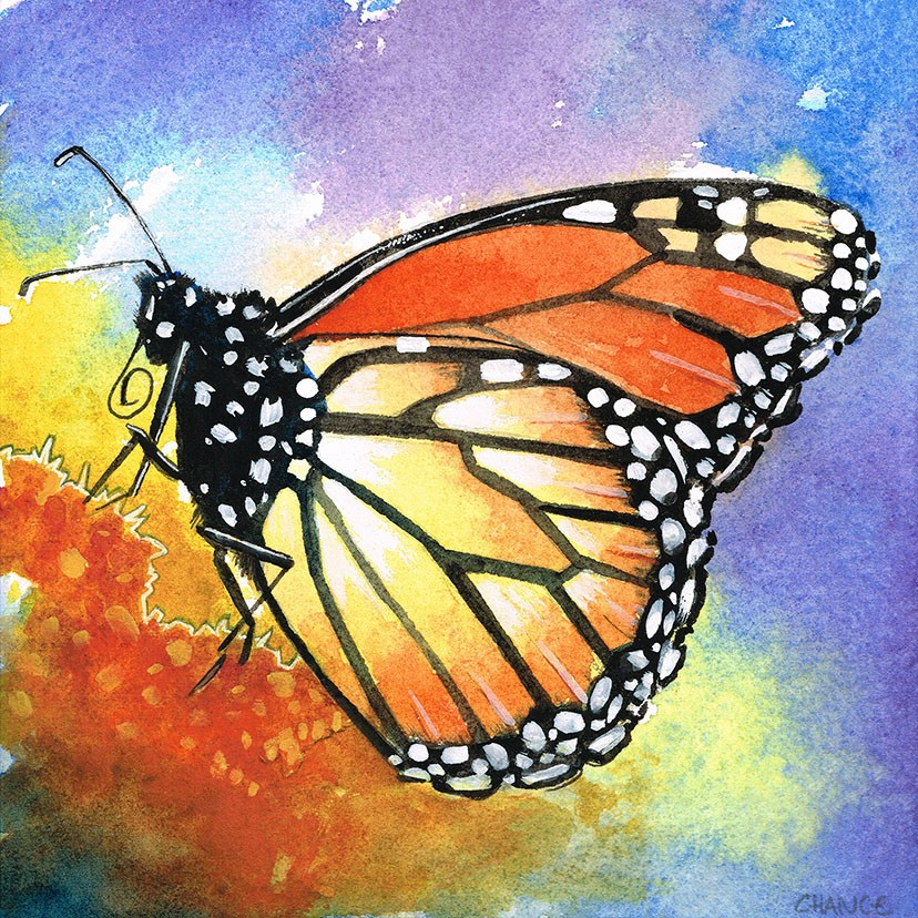 """No. 28 Monarch Butterfly"" original fine art by Annabel Chance"