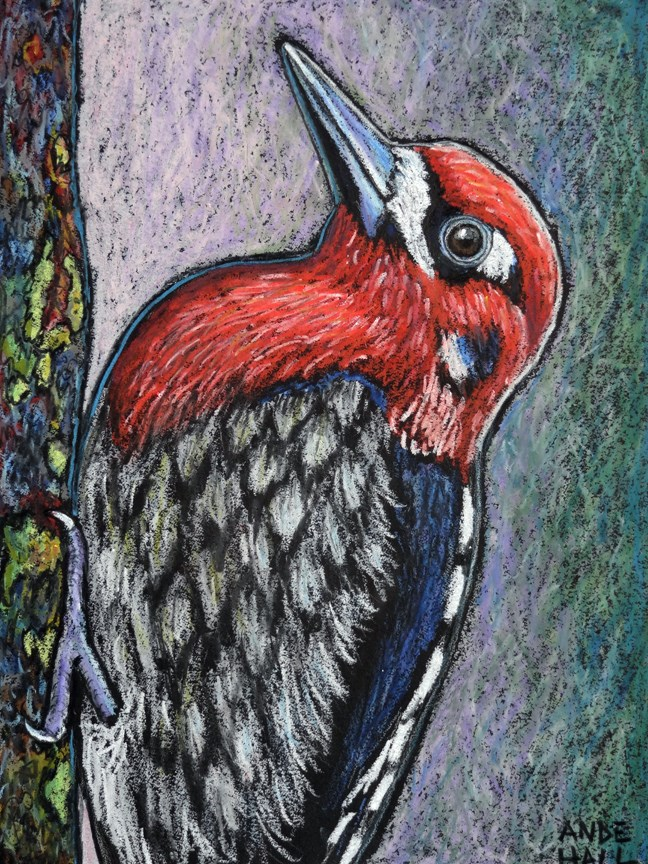 """Red Breasted Sapsucker"" original fine art by Ande Hall"
