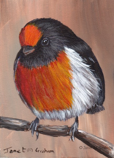 """Red Capped Robin ACEO"" original fine art by Janet Graham"