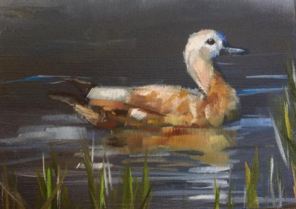 """Shelduck"" original fine art by Gary Bruton"