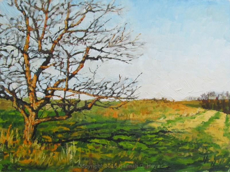 """Spring-time Shadows"" original fine art by Hannah C. Heyer"
