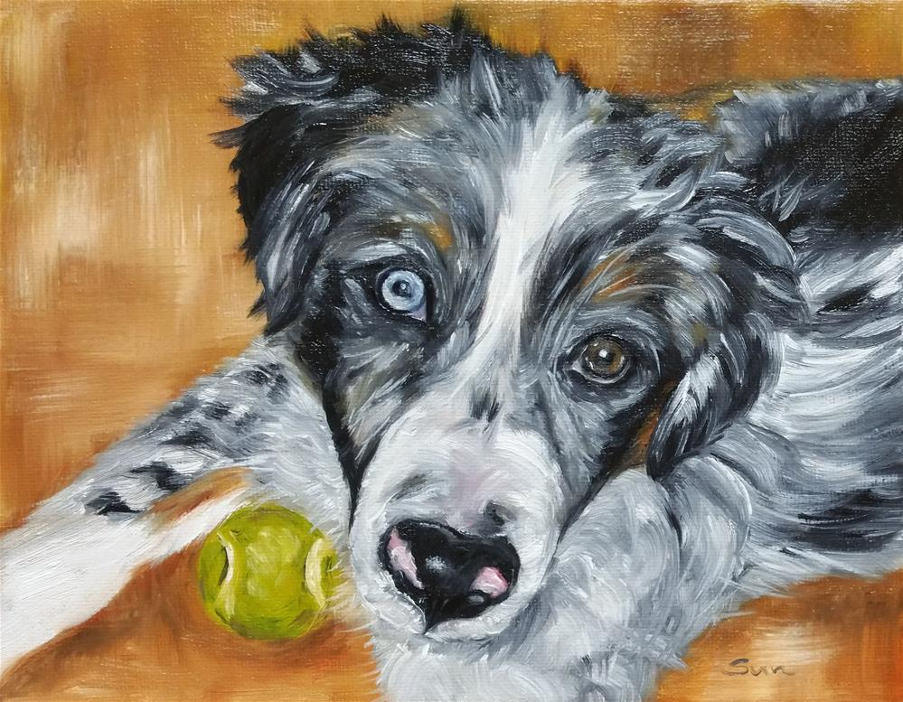 """AUSSIE, blue eye, Australian Shepherd"" original fine art by Sun Sohovich"